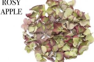 Biodegradable Autumn Petals.