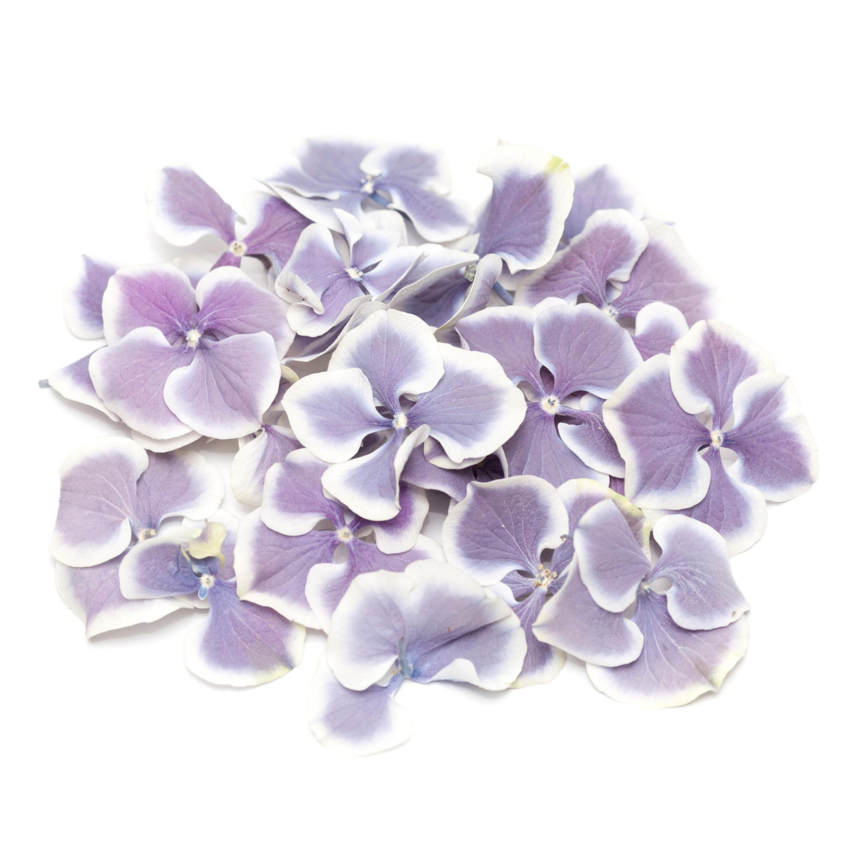 Amethyst Flake Hydrangea Petals