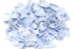 Ocean Blue Hydrangea Petals