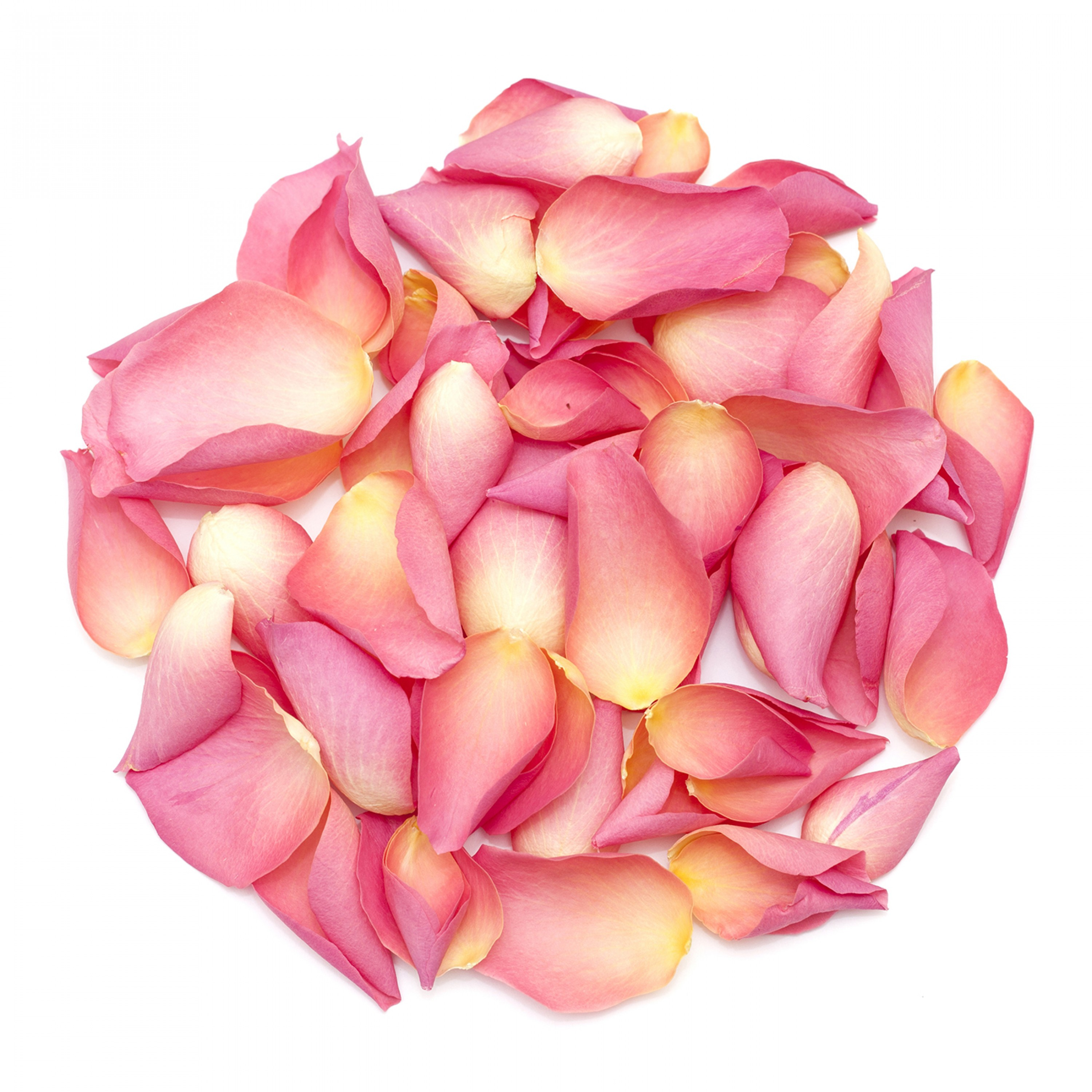 Pretty in Pink Rose Petals