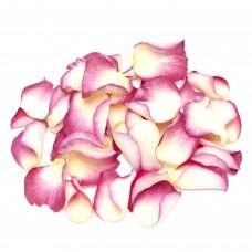 Summer Punch Rose Petals