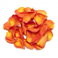 Sunset Rose Petals