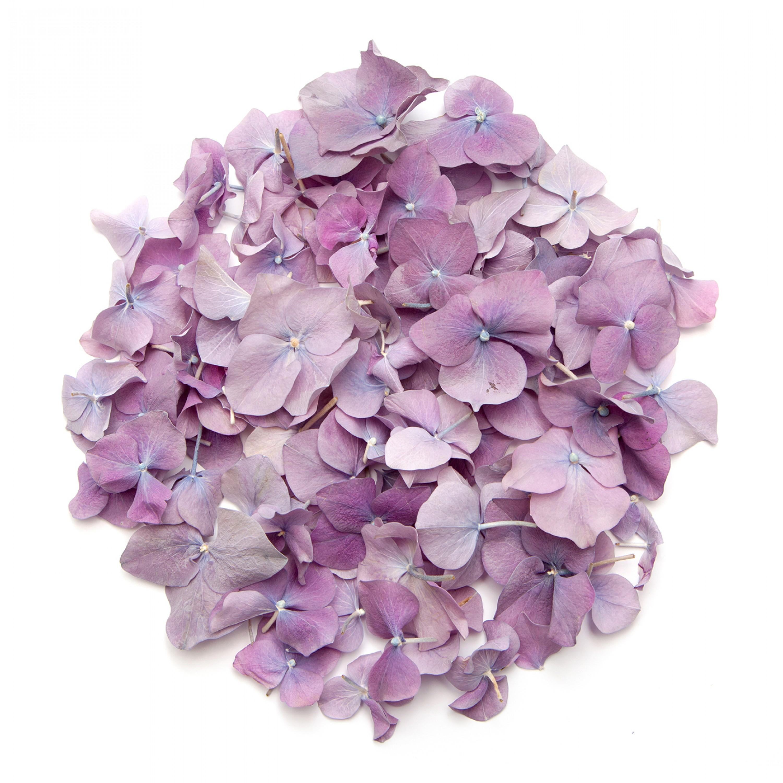 Heather Hydrangea Petals