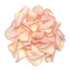 Hint of Pink Rose Petals