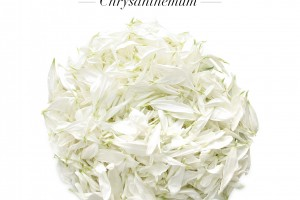 NEW Chrysanthemum Petals