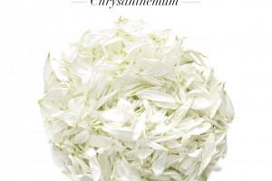 NEW Chrysanthemum Petals
