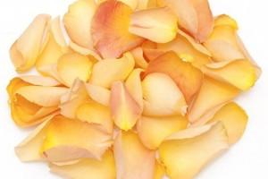 Peach Bellini Rose Petals