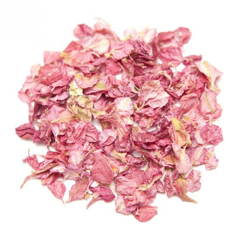 Pink Paradise Larkspur Petals