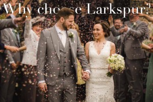 Why choose larkspur as your wedding confetti petals?